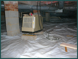 Cary Raleigh Durham Nc Green Building Assessments Mold